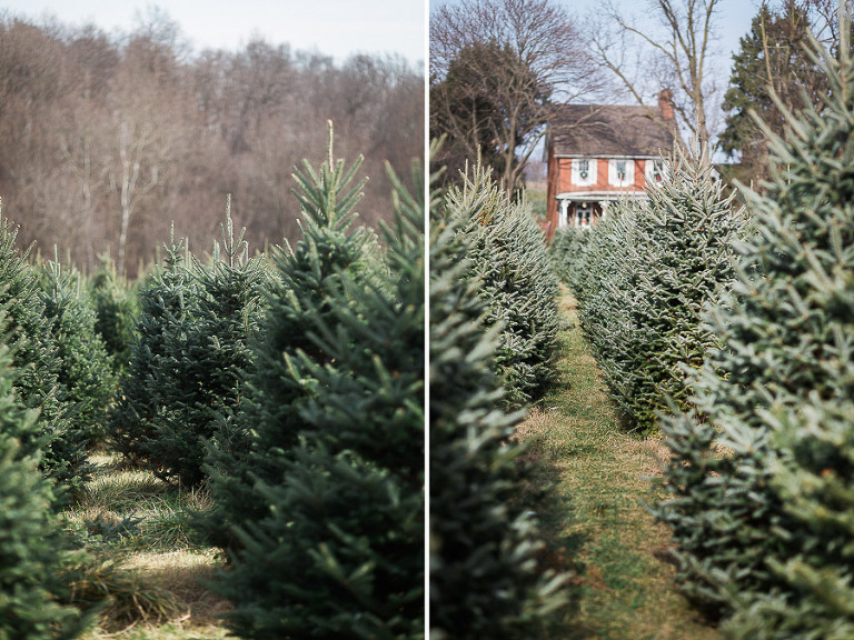Charming Holiday Engagement Session | Gaver Christmas Tree Farm ...